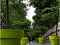 multiple large green plant pots with trees in, down a long street